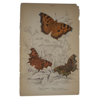 Antique 19th C. Hand Colored Butterflies Engraving
