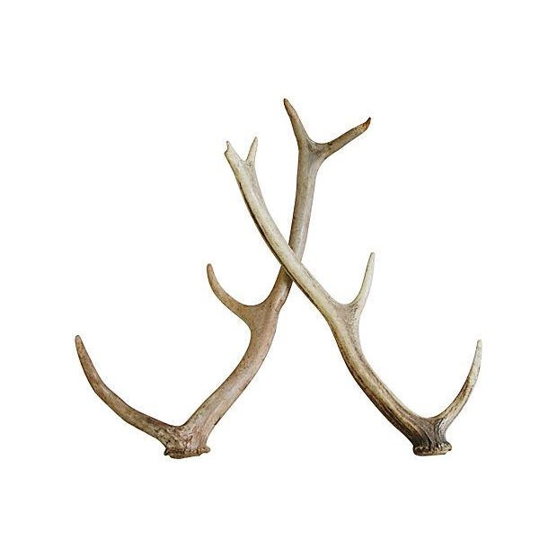 Naturally-Shed Deer Antlers - Pair - Image 1 of 3