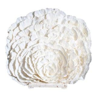 Large White Merulina Coral Sculpture or Centerpiece