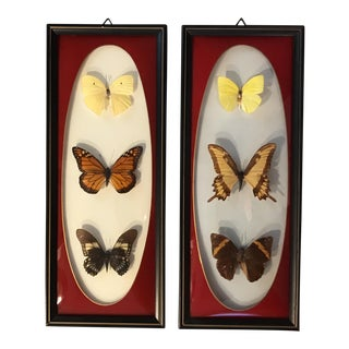 Vintage Framed Butterfly Display - A Pair