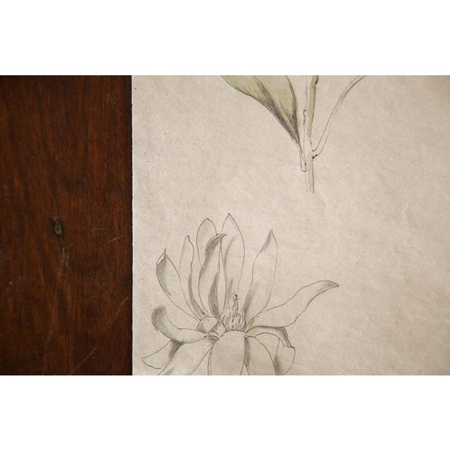 Antique Dainty Flower Watercolor Drawing - Image 4 of 4