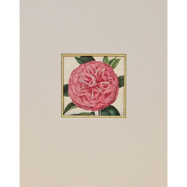 Verschaffelt 1854 Humboldt Camellia Print - Image 1 of 2