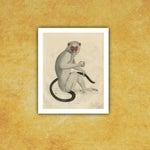 Image of Vintage Monkey Archival Print
