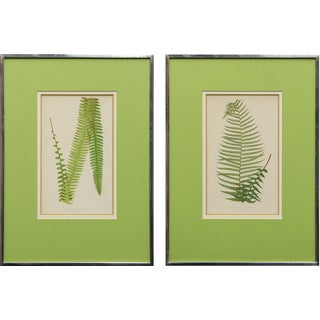 Antique English Botanical Prints - a Pair
