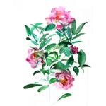 "Image of ""Peonies"" Original Watercolor Painting"