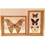 Image of Shadow Box Framed Butterflies - A Pair