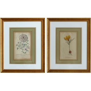 Antique English Botanical Engravings-a Pair