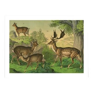 Vintage Deer Archival Print