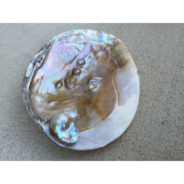Natural Shell Tray With Baroque Pearl - Image 8 of 11