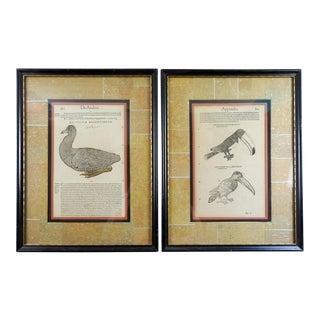 16th Century Bird Woodcuts - A Pair
