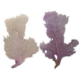 Natural Purple Sea Fan - Set of 2