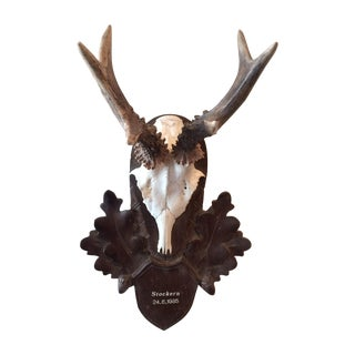 Vintage Black Forest Deer Antlers