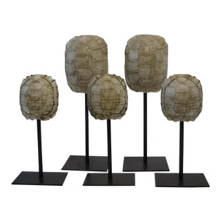 Mounted Resin Turtle Shells - Set of 5