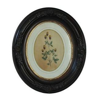 Civil War-Era Botanical Prints - Set of 4