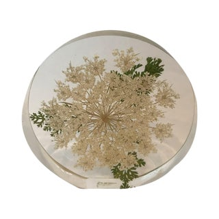 Queen Anne's Lucite Lace Flower Object