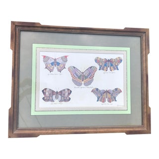 Framed Scientific Butterfly Rendering Print