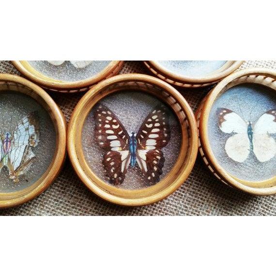 Image of 1960s Japanese Butterfly Specimen Coaster Set