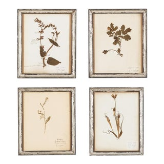 Set of 4 French Frames with Pressed Botanicals, Early 1900s