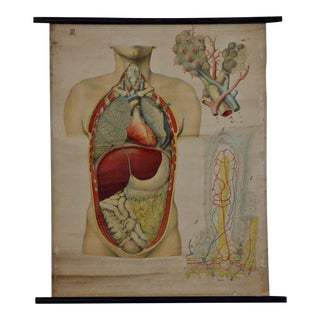 E. Hoelemann Antique Anatomical Chart