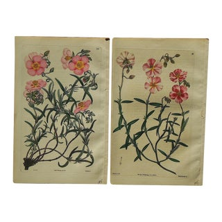 Antique Botanical Engravings - A Pair