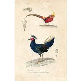 1850 Pheasant Print
