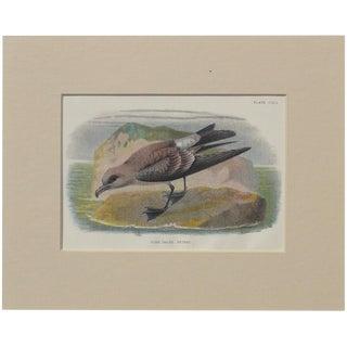 """1890 """"Fork Tailed Petrel"""" Original Chromolithograph"""