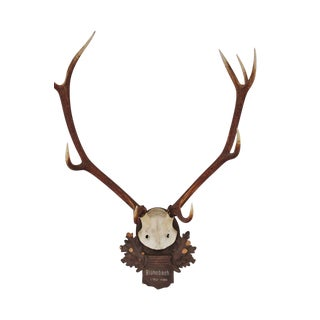 Large Vintage Austrian Stag Mounted On Carved Wood