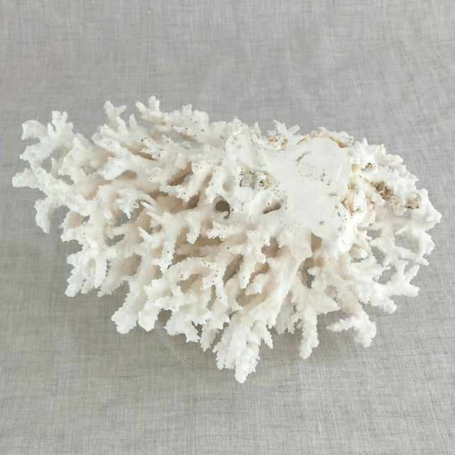 Image of Natural Sea Coral Specimen