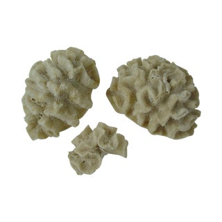 Collection of Coral - Set of 3
