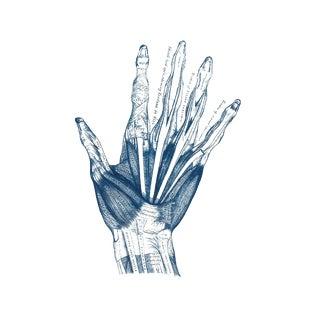 Vintage Hand Anatomy Illustration Cyanotype Print