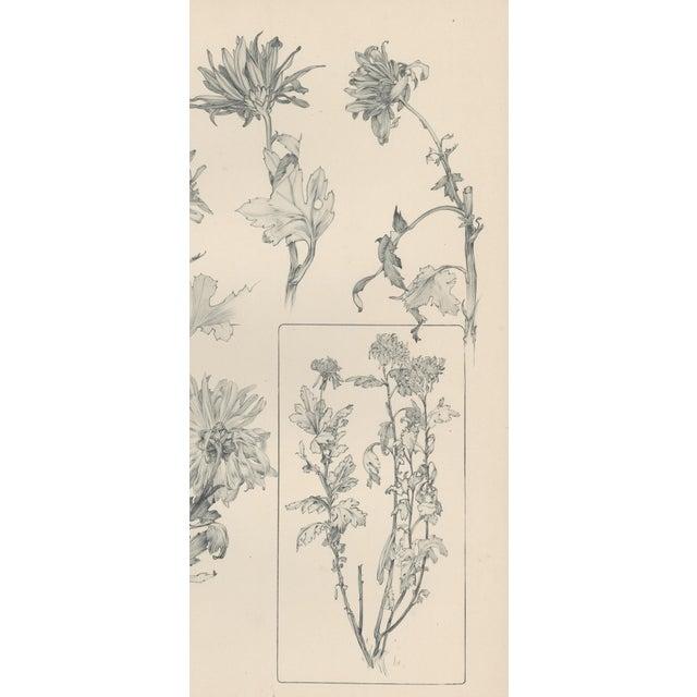 1904 Art Nouveau Botanical Drawing by Mucha - Image 3 of 4