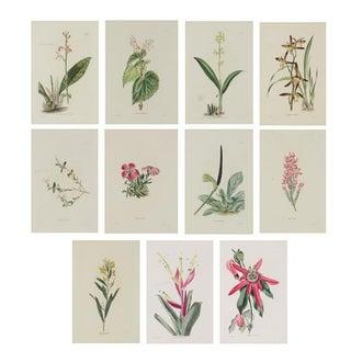 19th Century Botanical Prints - Set of 11