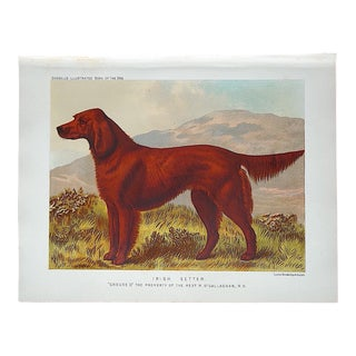 Antique Dog Lithograph - Irish Setter