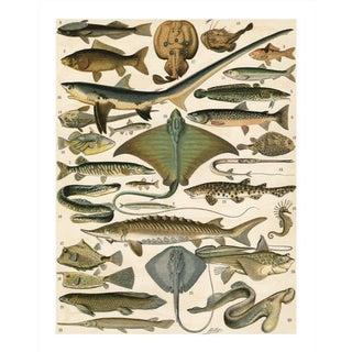 Vintage Sea Creatures Archival Print