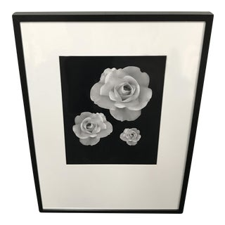 Framed Photograph of Three Roses in Bloom