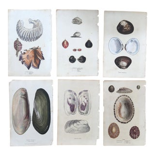 Antique Sowerby Sea Shell Hand Colored Engravings - Set of 6