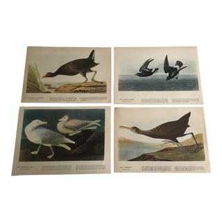 Vintage Audubon Shore Birds Lithographs - Set of 4
