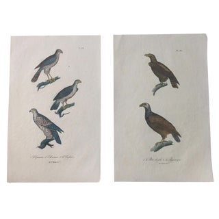 French Hand-Painted Eagle Engravings - A Pair