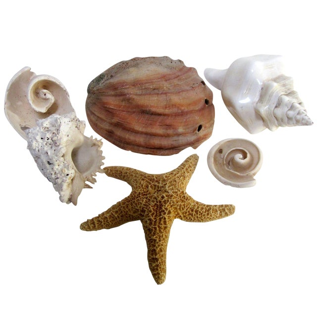 Coastal Collection Sea Shells Shell - Image 1 of 4