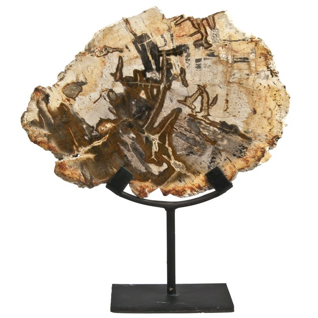 Image of Petrified Wood Slice on Stand