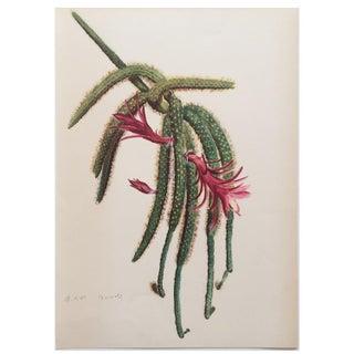 1930s Vintage Cactus Art Lithography by Arlette Davis