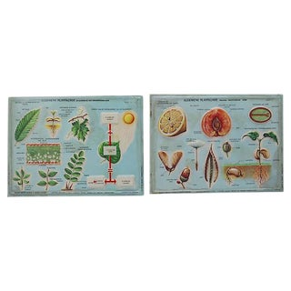 1950s Botanical Science Plaques - A Pair