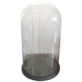 Antique Museum Glass Dome