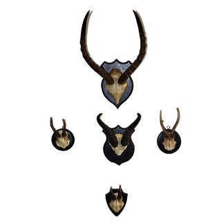 Taxidermy Horns - Set of 5