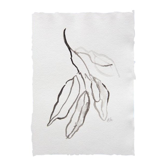 Bay Leaves in Ink Drawing - Image 1 of 3