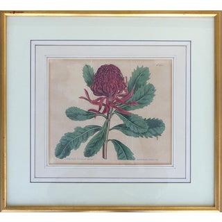 Antique English Botanical Engraving