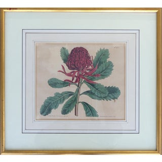 Antique English Botanical Engraving