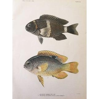 Antique 1905 Tropical Fish Chromolithograph