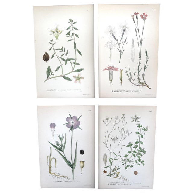 1922 Swedish Floral Prints - Set of 4 - Image 1 of 6
