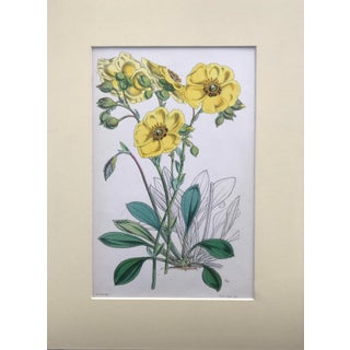Vintage Botanical Etching